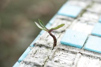 Sprout through tiles