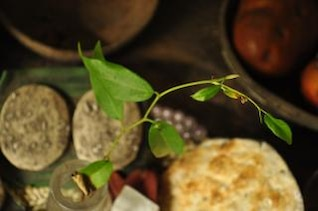 Sprouting plant