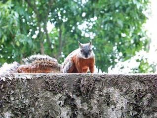 Squirrel, spring