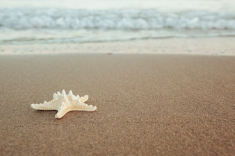 Starfish at the shoreline
