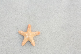 Starfish kept on sand
