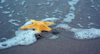 Starfish on a sandy beach