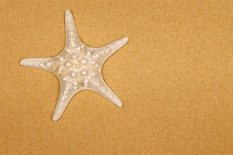 starfish vectors photos and psd files free download