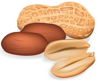 Stock Ilustrations Peanut Vector