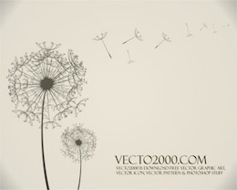 Stock vector dandelion