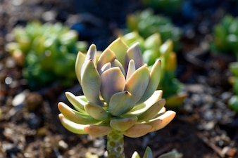 Succulent plant in natural sun light on blurred background