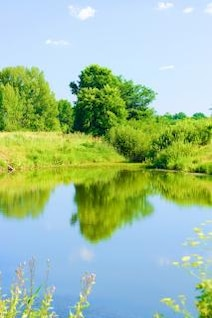 summer landscape  rural