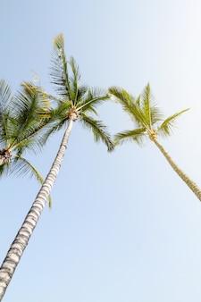 夏の旅行休暇の概念。青い空の背景に美しいヤシ。トーニング