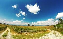 Summertime Grass Landscape