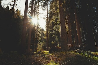 森の中の太陽のビーム