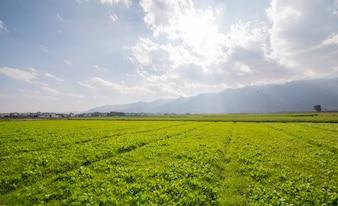 サニー草原風景