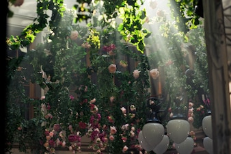 Sunshine crosses the garlands of greenery hanging over the courtyard