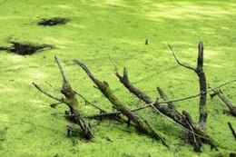 swamp  mud