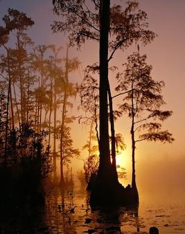 Swamp georgia silhouette sunset okefenokee  florida