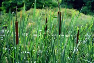 Tall Grass, scene