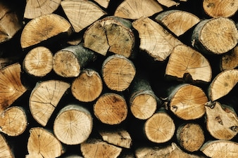 Texture of cut logs