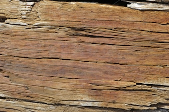 Texture of damaged wood
