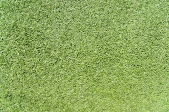Texture of grass. Green background.