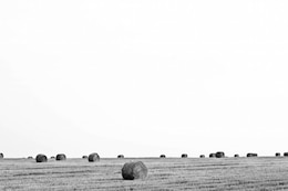 The harvest in black and white