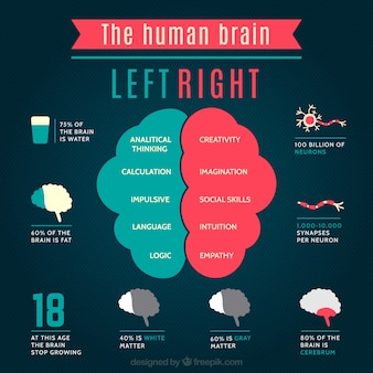 The human brain infographic