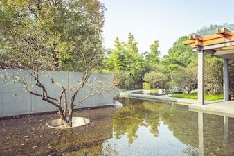 公園の池と植物