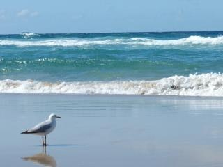 The seagull, beach
