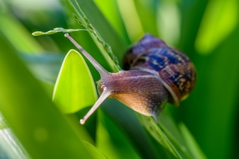 The snail in the morning