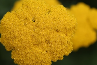 The texture of the flowers
