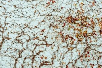 Thin branch texture