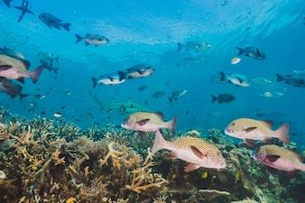 This area harbors extraordinary marine biodiversity