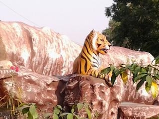 tiger on hill
