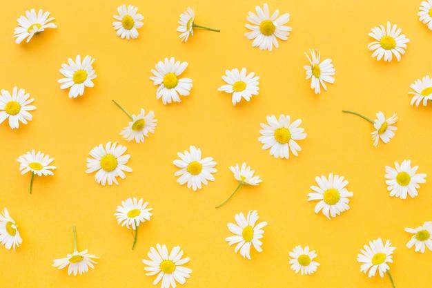 Top view daisies arrangement