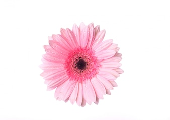 Top view of pink flower with drops