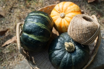 Top view of pumpkins and rope