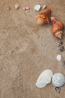 Top view of sand with several seashells