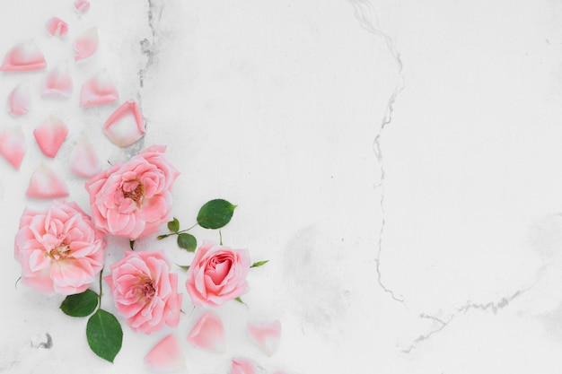 Top view of spring roses with petals and marble background