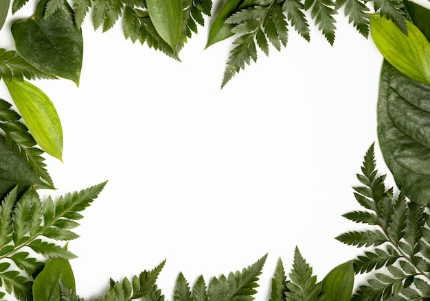 Top view tropical leaves background