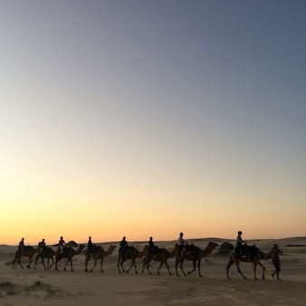 Travel sand indian rajasthan adventure