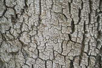 Tree bark with cracks