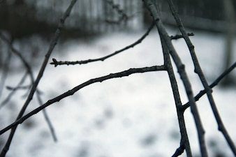 Tree branches winter time