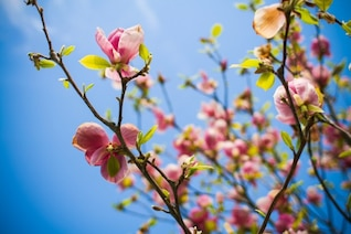 Tree flowers in bloom