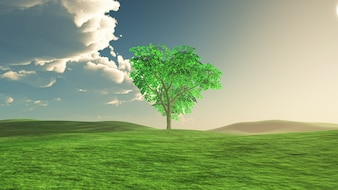 Tree in middle of a meadow