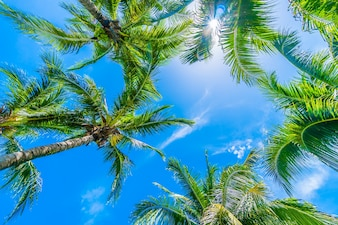 Tree palm with sky background