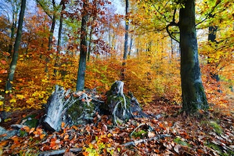 Tree stumps and autumn leaves
