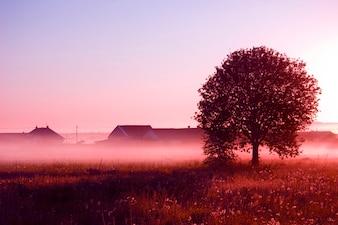 Tree with fog