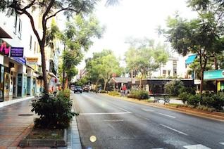 Trees in an urban street
