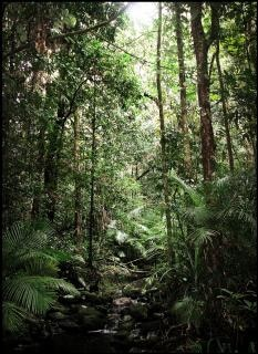 tropical jungle  travel