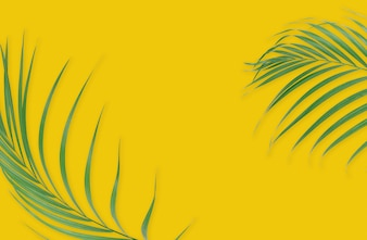 Tropical palm leaves on yellow background. Minimal nature. Summer Styled.
