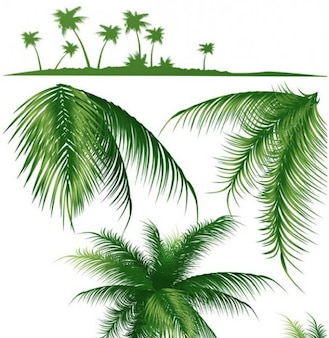 Tropical palm tree silhouette and branches
