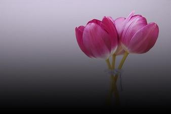 チューリップ花屋春自然誕生花、動植物